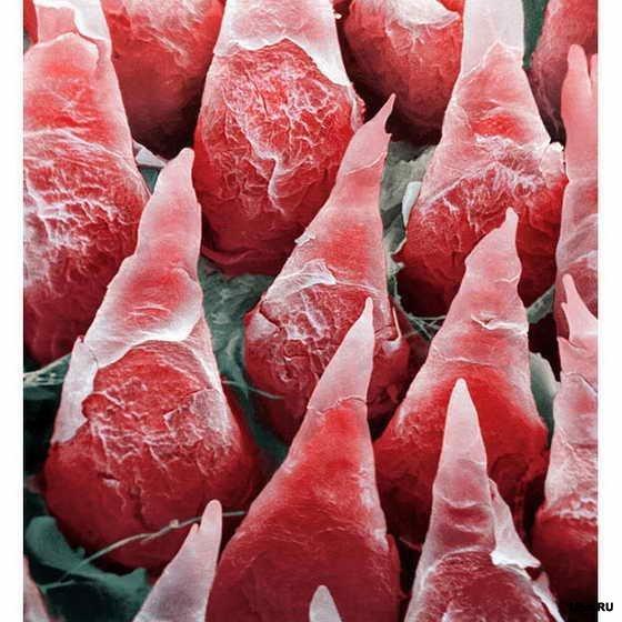 Фото качественной спермы под микроскопом 7 фотография