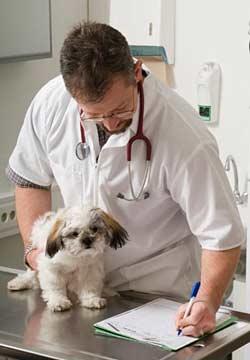 микроскопы в ветеринарии